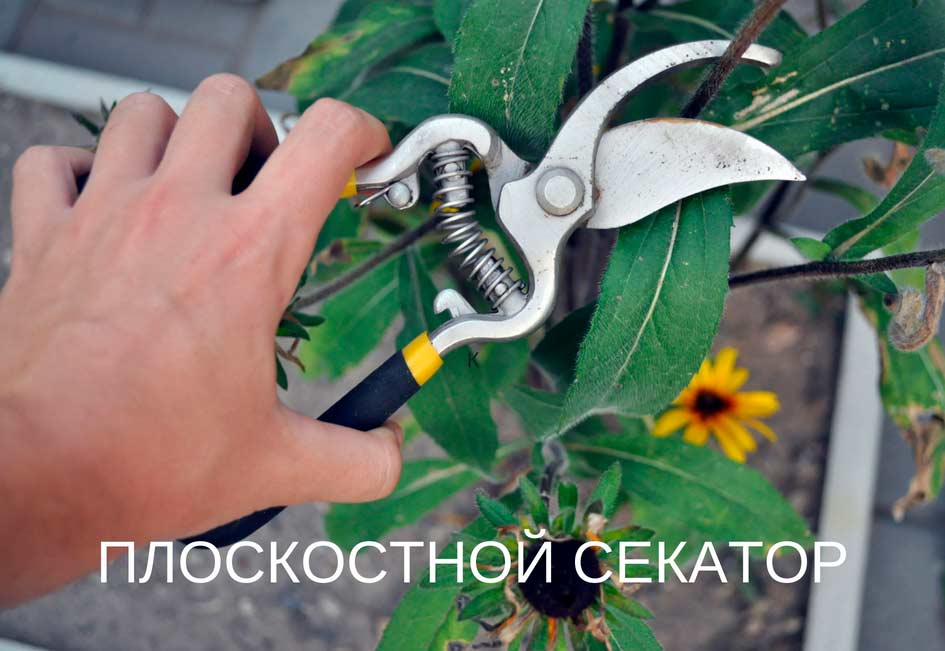 Плоскостной или обводной садовый секатор